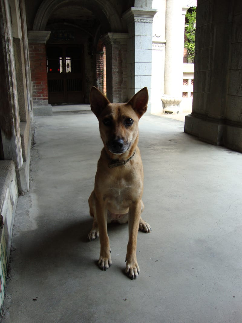 "This is one of the five dogs that runs about our house. This one's name is Ah-Huei, or ""Little Flower."""
