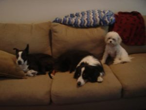 our couch in Chicago was big enough for three hounds & three people! 98 inches!