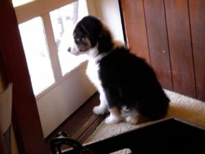 Our back door was arched and exited onto a massive porch. We loved it. So did Sprocket. (Fuzzy!)